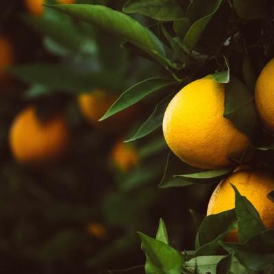 Limoncello Spritz -